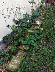 The old footings, with Japanese anemones growing from them